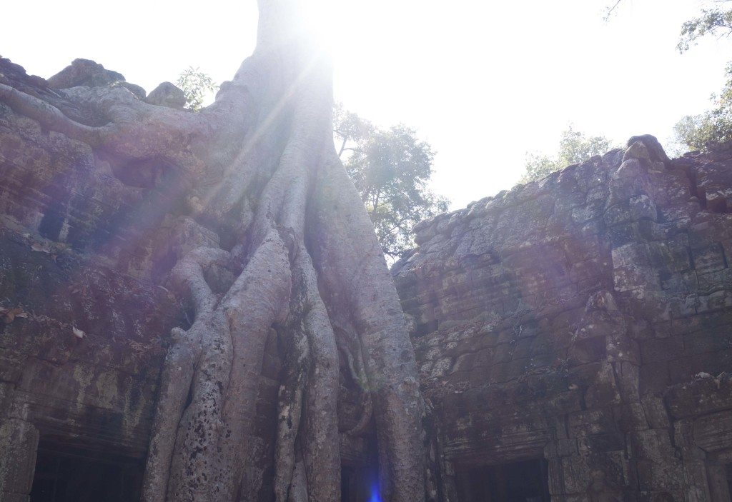 Angkor Wat Ta Prohm- Siem Reap Cambodia 6 Must See Attractions -- Lesbian Travel Guide- DopesOnTheRoad.com