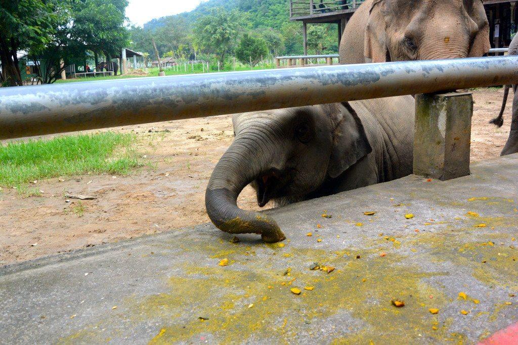 ride-an-elephant