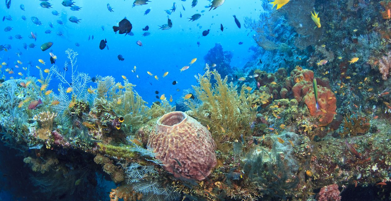 Understanding Tourism's Impact on the Environment at the UN Oceans Conference