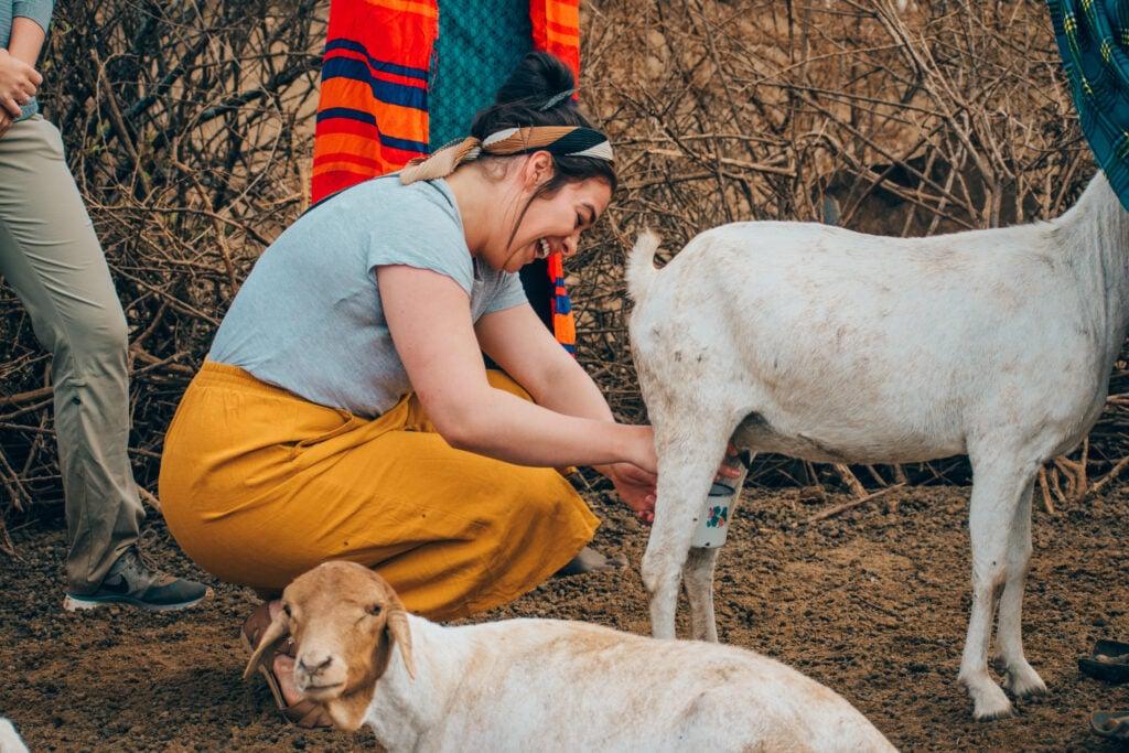 Maasai-Village-Goat-Milking